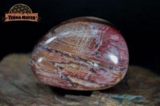 Galet de bois fossile