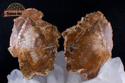 Tranches de bois fossile