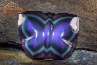 Papillon Obsidienne Oeil Céleste / Arc en Ciel AAA