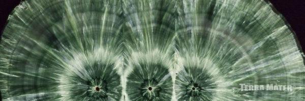 Séraphinite (Clinochlore) - Russie - Tranche polie