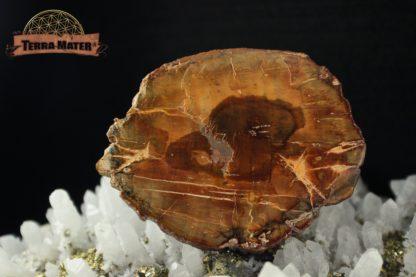 Petite tranche de bois fossile